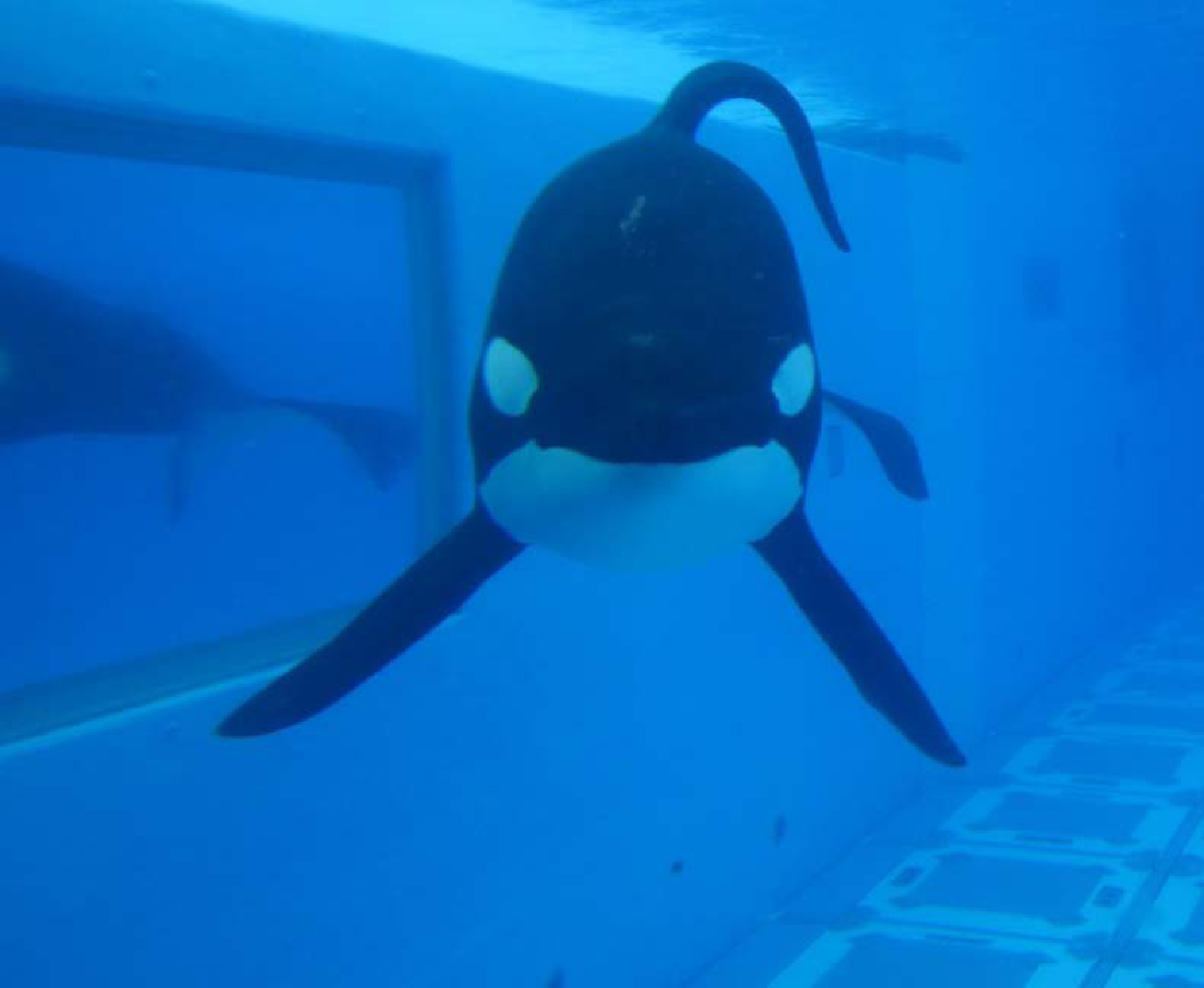 Whales In Captivity